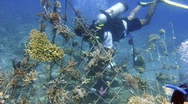 """Shocking"" Coral Reefs Back to Life"