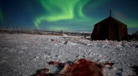 Sámi-Walking with Reindeer/ Photos by Erika Larsen
