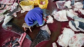 WildLifeRisk Exposes Mass Whale Slaughter in China