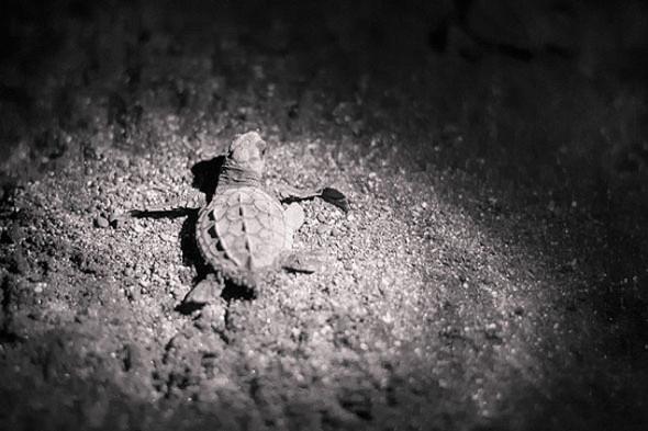 Turtle_large