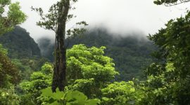 Majestic Monteverde